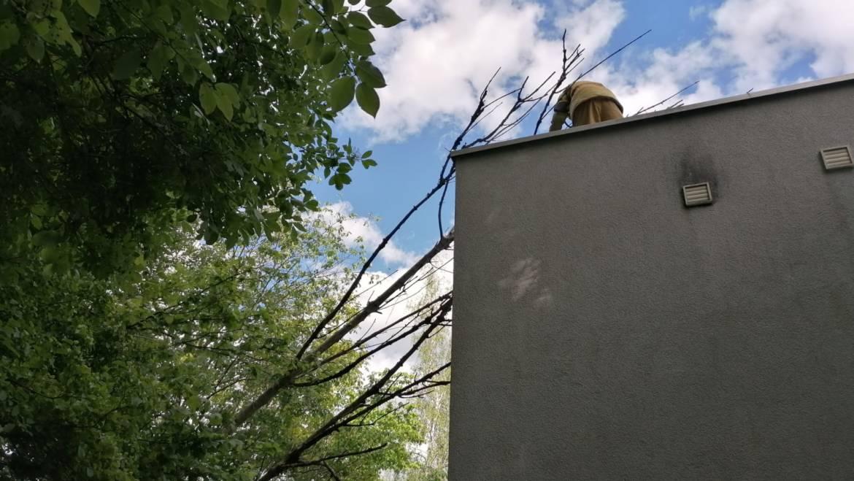 Baum auf Haus